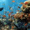 Búsqueda de tesoro en las profundidades del mar